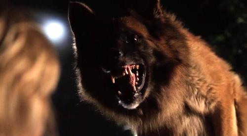"One of the Malicious Mutts from ""The Breed"" (2006)"